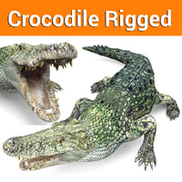 crocodile rigged ready 3D