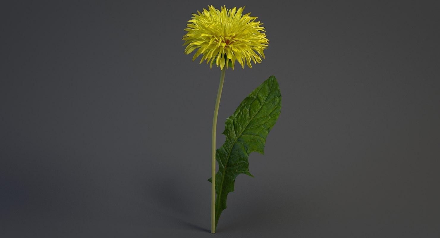 3D realistic dandelion flower