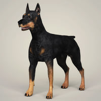photorealistic doberman dog model