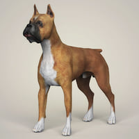 photorealistic boxer dog 3D model