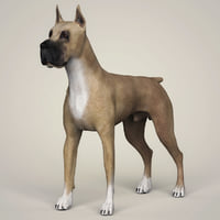 great dane dog animation 3D model