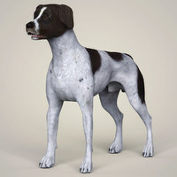 3D german shorthaired dog animation