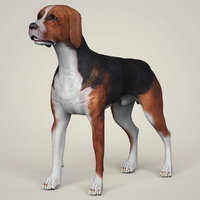 hound black dog animation 3D