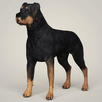 3D rottweiler dog animation