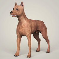miniature pinscher dog animation 3D