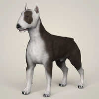 bull terrier dog animation 3D model