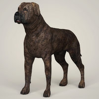 3D mastiff dog animation model