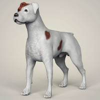 3D parson russell terrier dog animation