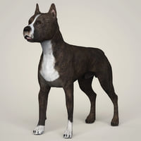 3D american staffordshire dog animation model