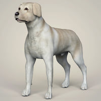 3D labrador dog animation model