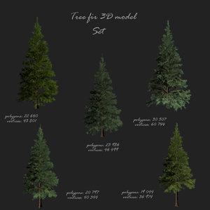spruce fir 3D model