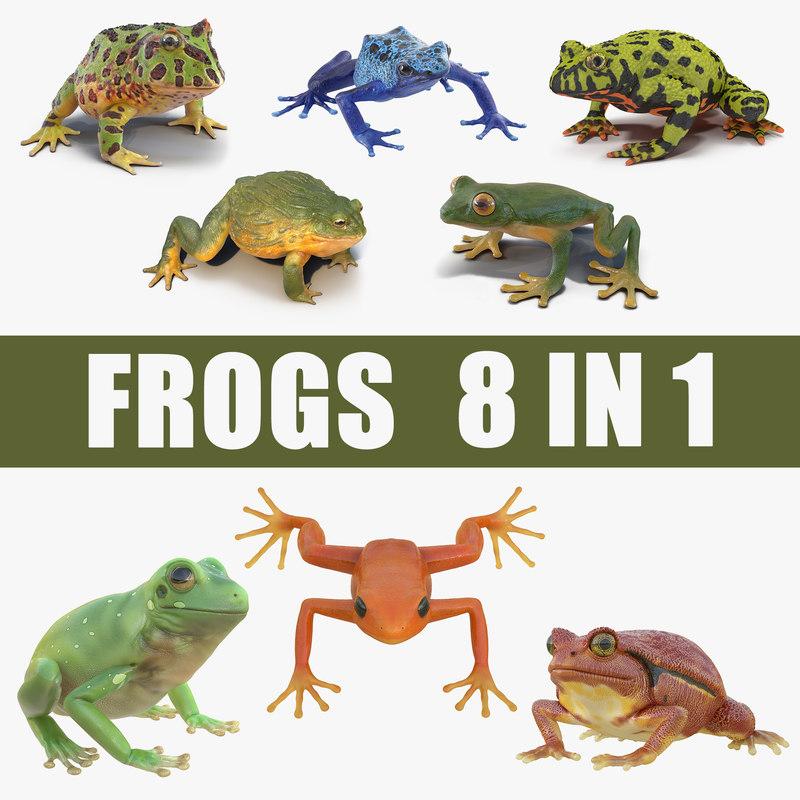 frogs poison dart model