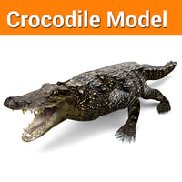 Crocodile Low poly game ready model