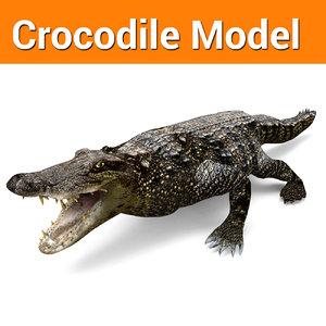 crocodile ready model