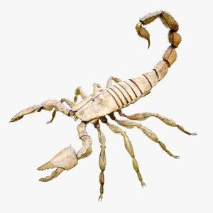 4k scorpion model