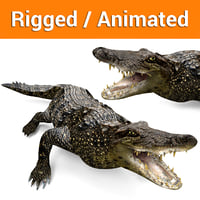 3D crocodile rigged animation model