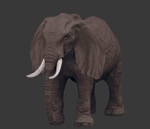 pack africa animals 3D model