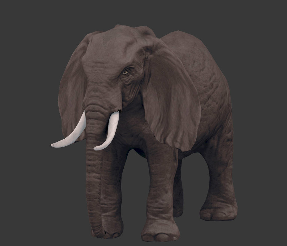 pack africa animals 3D model