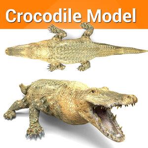 3D crocodile ready