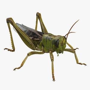grasshopper fur 3D
