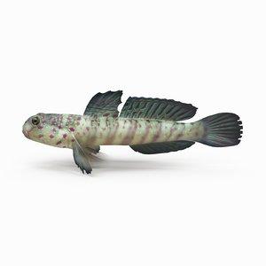 shrimp goby 3D model