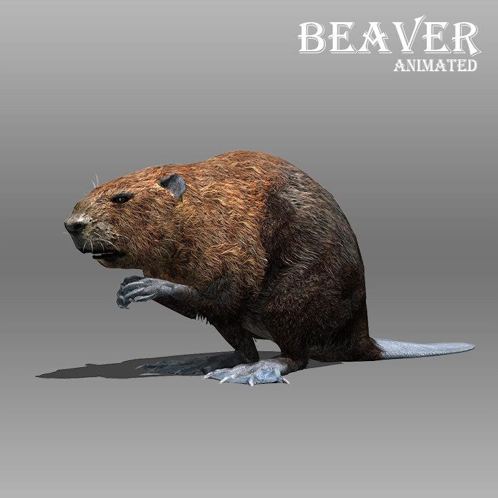 beaver animations model