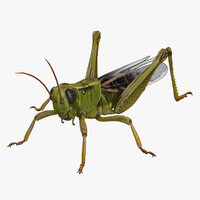 grasshopper field realistic 3D model