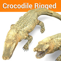 crocodile rigged 3D model