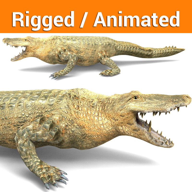 crocodile rigged animation 3D