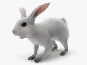 white rabbit 3D model