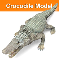 3D crocodile ready