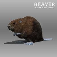 3D beaver fur model