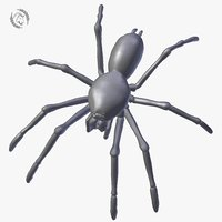 spider tarantula 3D model