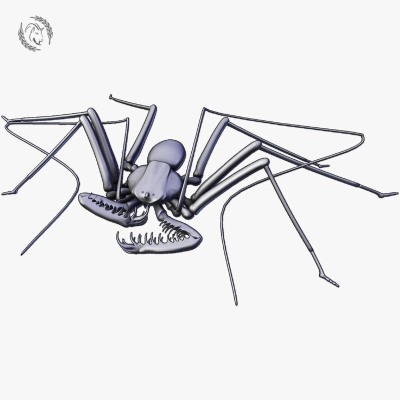 3D whip spider