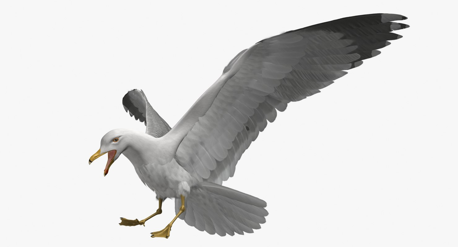 rigged california gull 3D