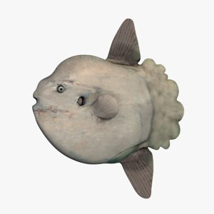 3D enormous ocean sunfish model