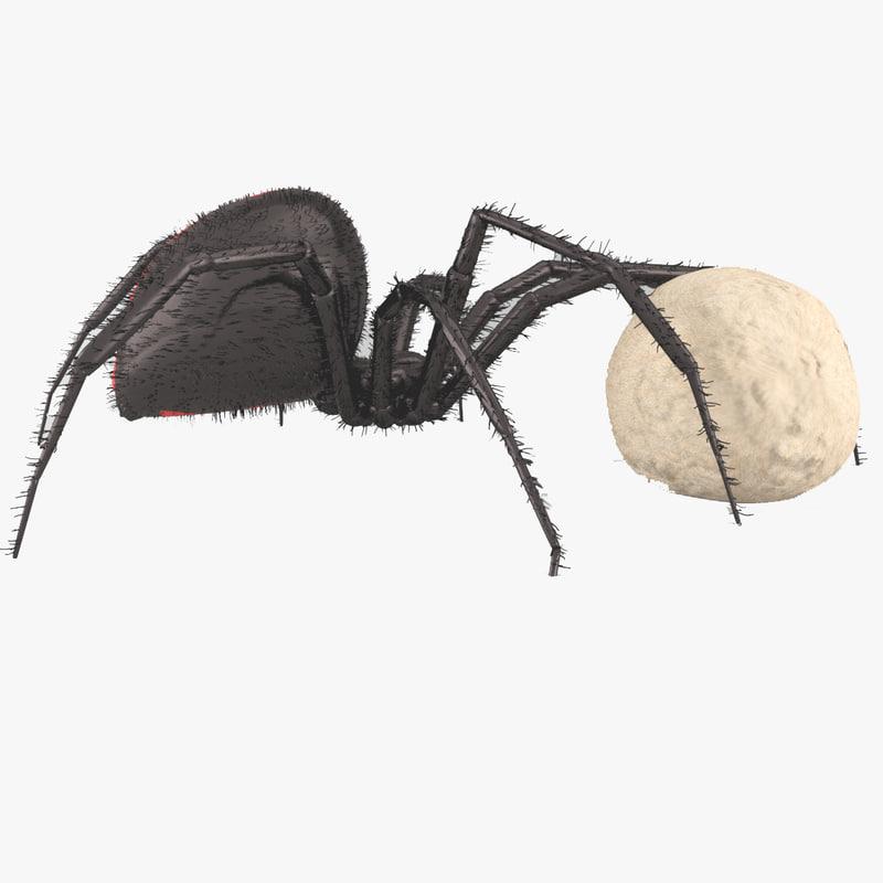 3D model northern black widow arachnid