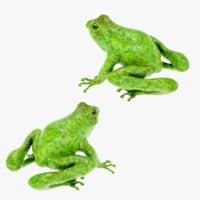 3D 4k frog model