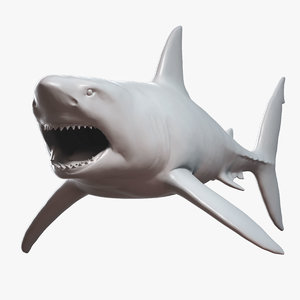 3D great white shark base mesh model