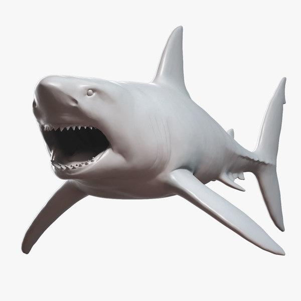 3D great white shark base mesh model