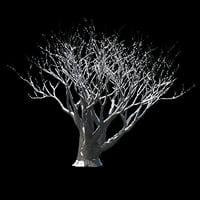 3D winter tree 021 model