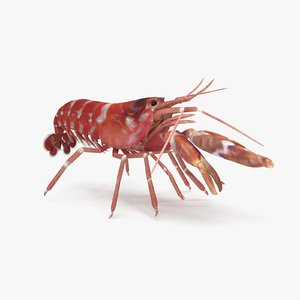 3D model pistol shrimp