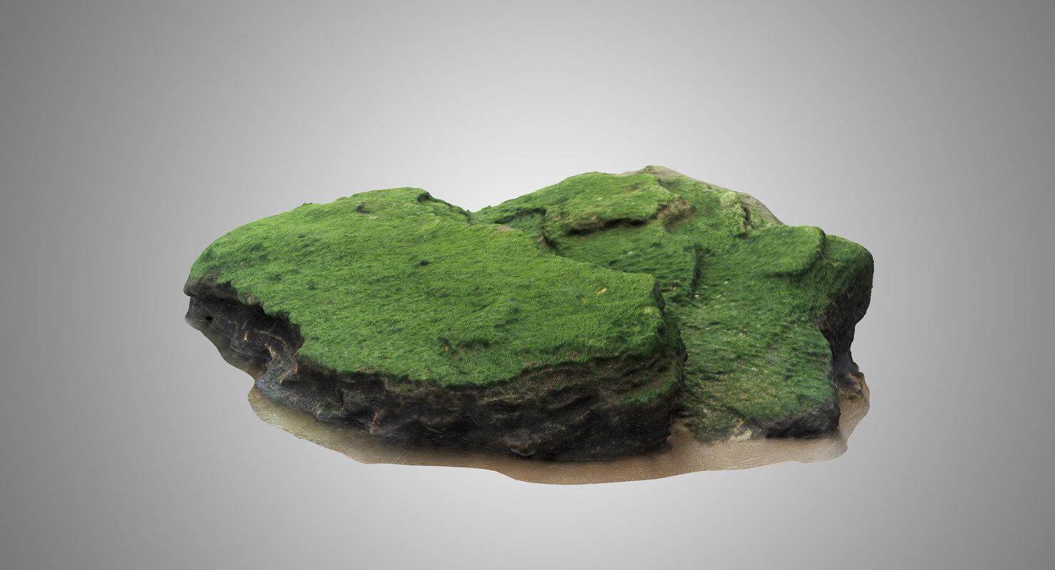 limestone seaweed 3D model