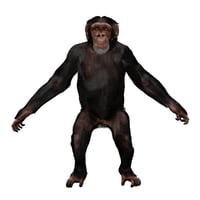 Chimp - Young Male (Rigged, Fur)