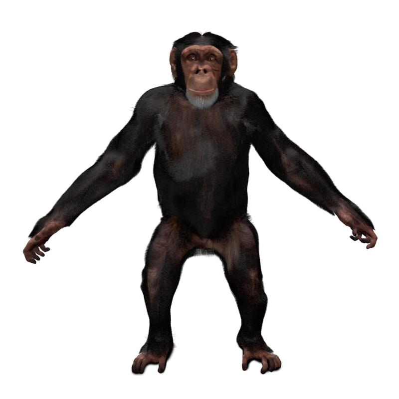 3D chimpanzee fur rig