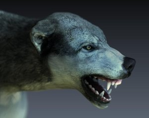 3D model wolf