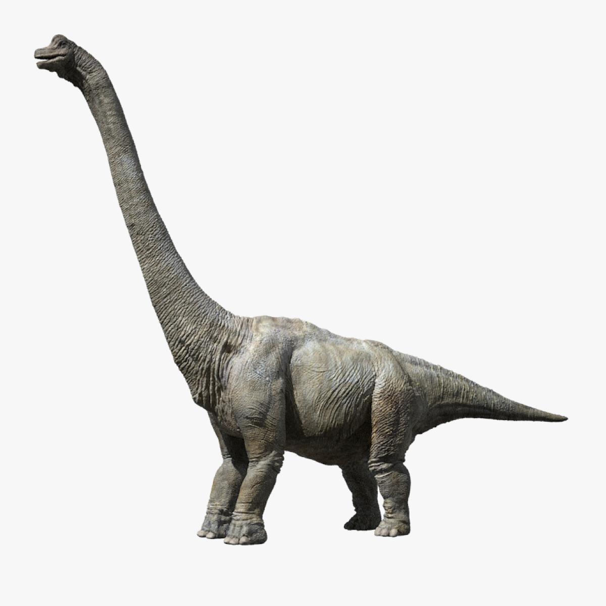 3D brachiosaurus v-ray rigged