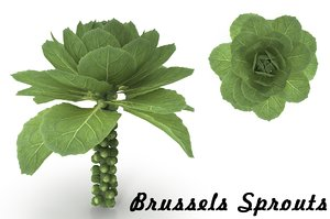 3D brussels sprouts