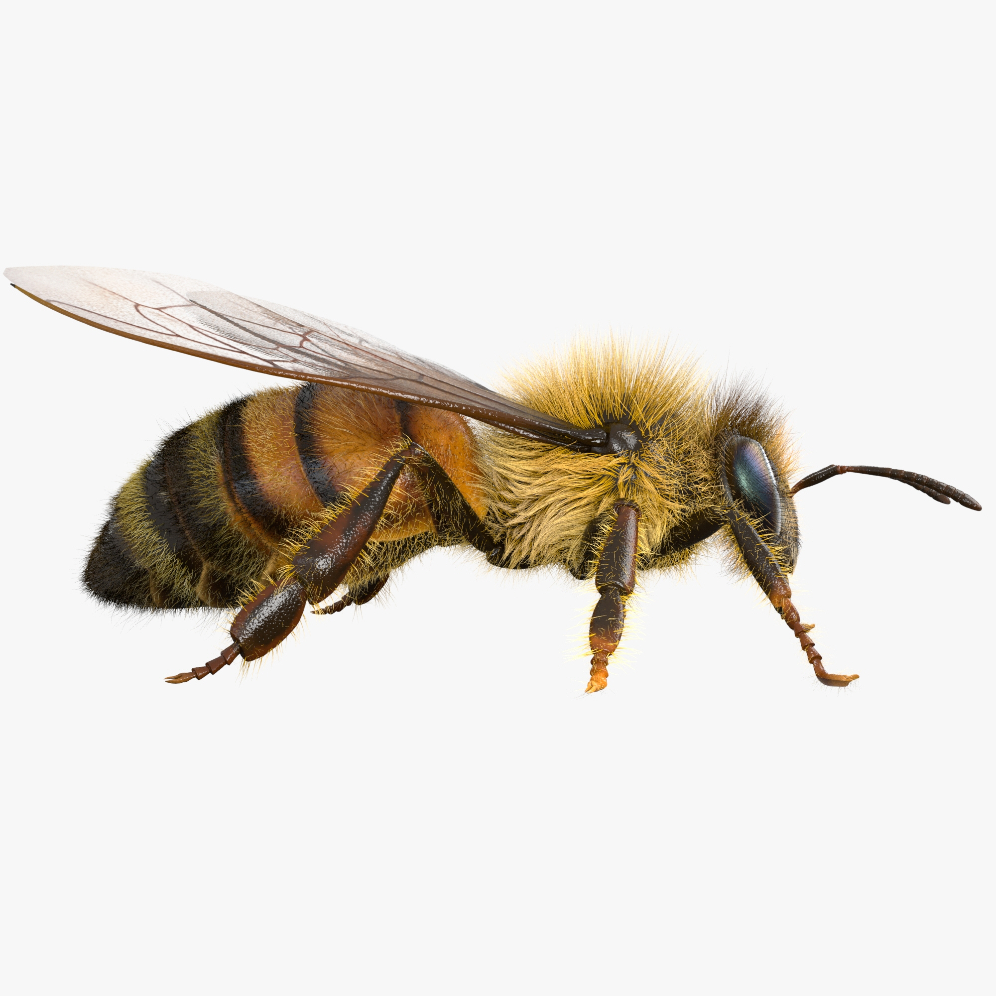 bee rigged model