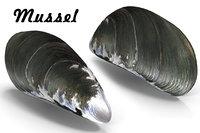 mussel pbr 3D model